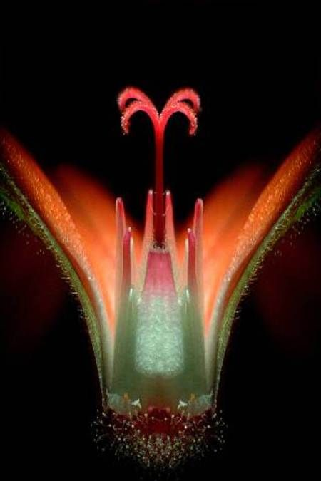 Geranium Flower (20x)