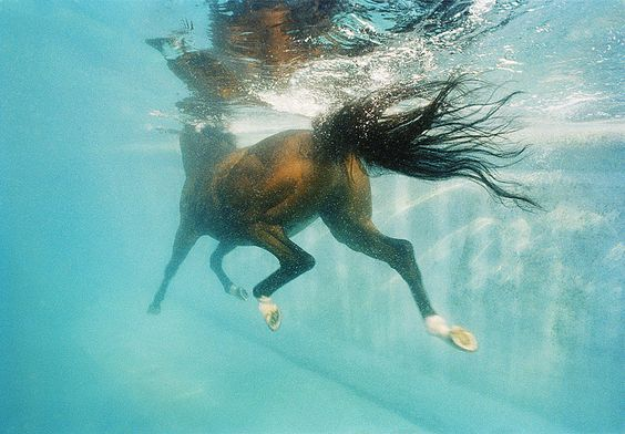 An interesting perspective of a horse performing underwater exercises.