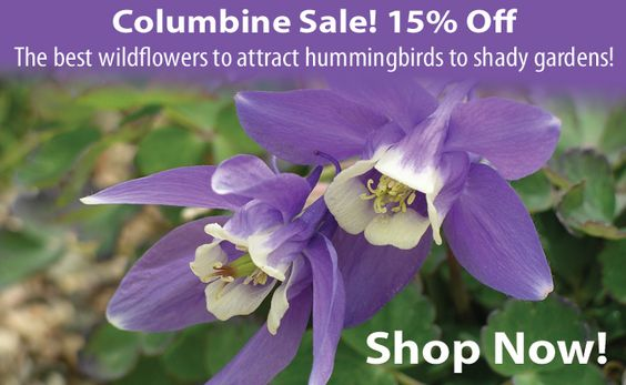 Columbine Sale! 15% Off!