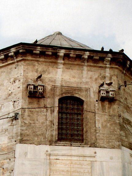 Casas de Aves, Turquía