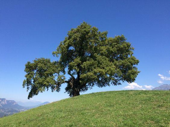 """Résultat de recherche d'images pour """"CENTERBLOG BELLE Image de vieu chene d'arbre animé"""""""