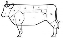 Rundvlees: wat zit waar, en hoe maak je het klaar?: And How, How Do, Klaar Handy, Het Klaar, Do You, You, Where, Koken Enzo, Rundvlees Wat