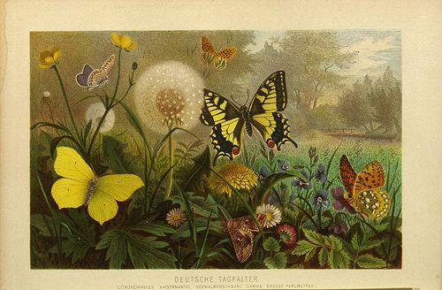 ie Insekten, Tausendfüssler und Spinnen..  Leipzig,Bibliographische Institut,1877..