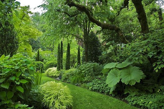 Cynthia Woodyard Landscape Design & Horticultural Photography | projects > Love the Italian trees in a cluster instead of a row = very different: