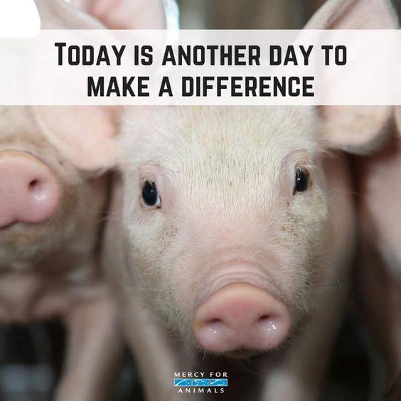 Choose compassion. Choose vegan.