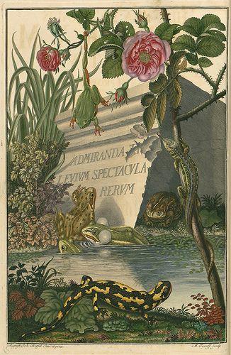 * Historia naturalis ranarum nostratium 1758 (frontispiece August Johann Rösel von Rosenhof (1705-1759)