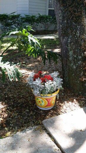 ideias para meu jardim : ideias para meu jardim:Segredos do Meu jardim