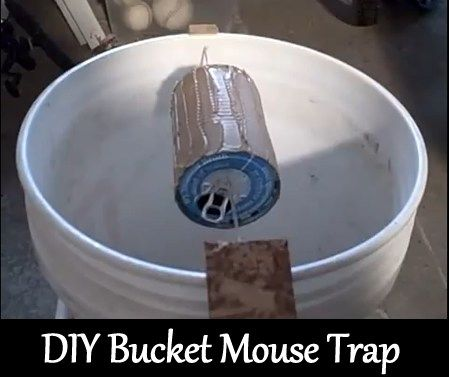 Making A Self Restting Mouse Trap Do You Have A Mouse