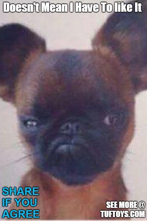 Funny Dog Memes Part 6 Grumpy Dog Funny Dog Memes Smart Dog Toys