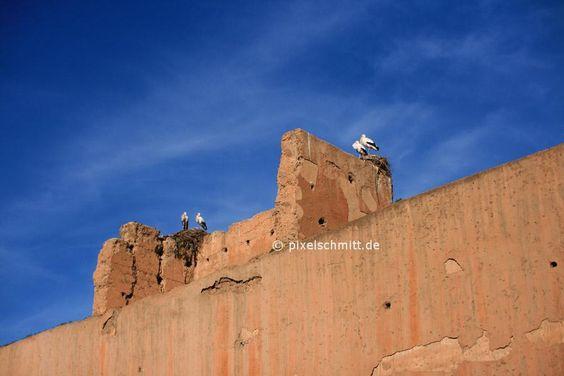 Störche in Marrakesch