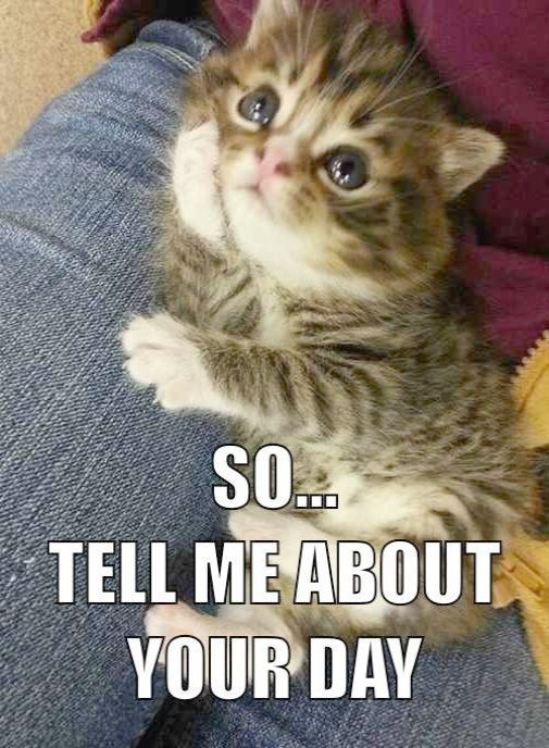 Do I Look Funny Mommy Kitten Pictures Cats And Kittens Cute