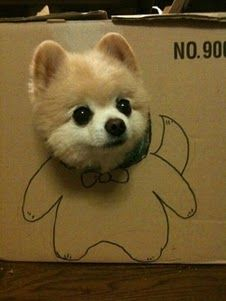 cute dog in packing case