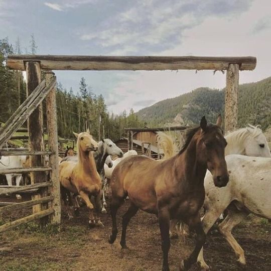 Pin By Fuffydud On Gw2 Swefred Cutteridge Horses Beautiful Horses Horse Ranch