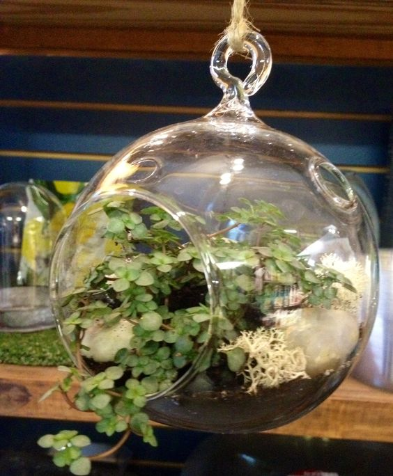 Awesome Terrarium Containers Hanging With Charming Unique