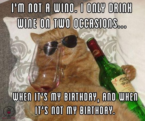 Funny Drunk Birthday Meme : Funny cat memes listen to the wine it s knows what up pinterest cats