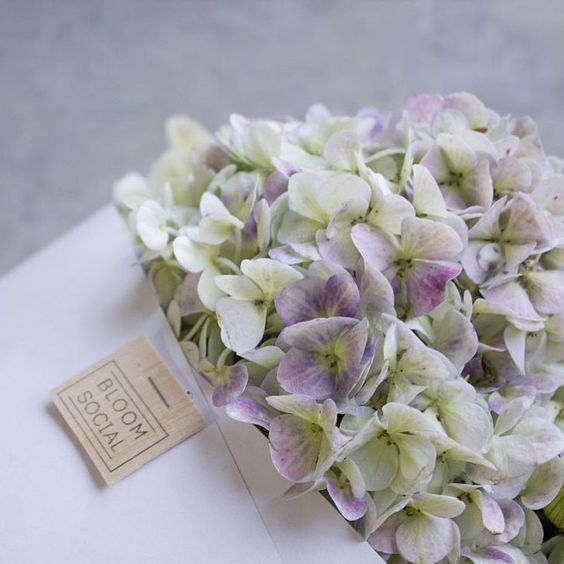 Bloomsocial.nz flowers and botanical delivery