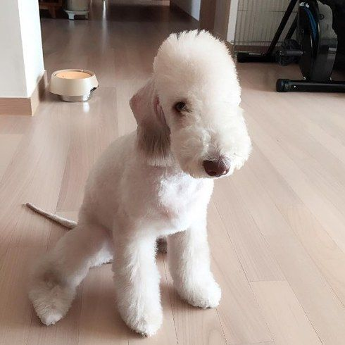 14 Perritos de raza Terrier que probablemente no conocías y vas a querer ahora mismo