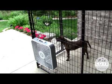 Keep Your Pets Cool This Summer With A K9 Cooling Fan On Their