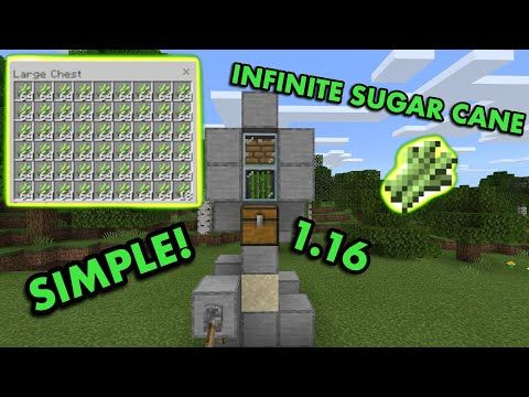 Easiest 1 16 Zero Tick Sugarcane Farm Tutorial In Minecraft Bedrock Mcpe Xbox Ps4 Switch Windows10 Youtube Minecraft Farm Minecraft Cool Minecraft Seeds