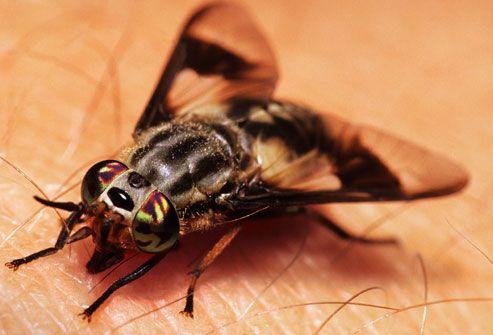 Do Flying Ants Bite