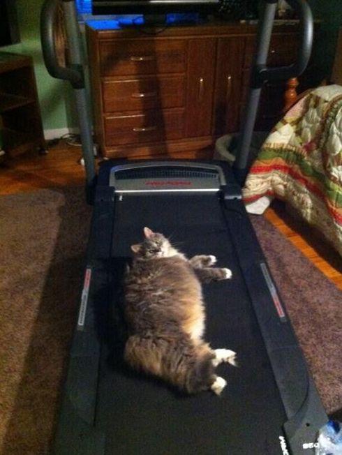 """""""Here's how I use my treadmill."""""""