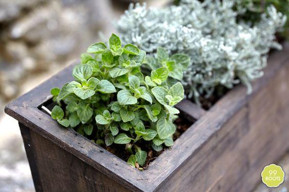 Ein Kräutergarten auf dem Balkon u2022 Blumen \ Pflanzen Blog