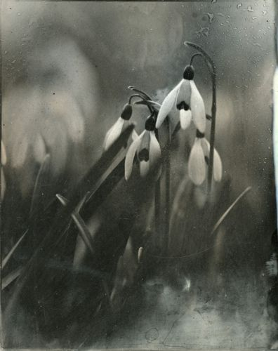impermanence by Isa Marcelli. http://www.isamarcelli.com/fr/portfolio-1119-0-40-impermanence.html