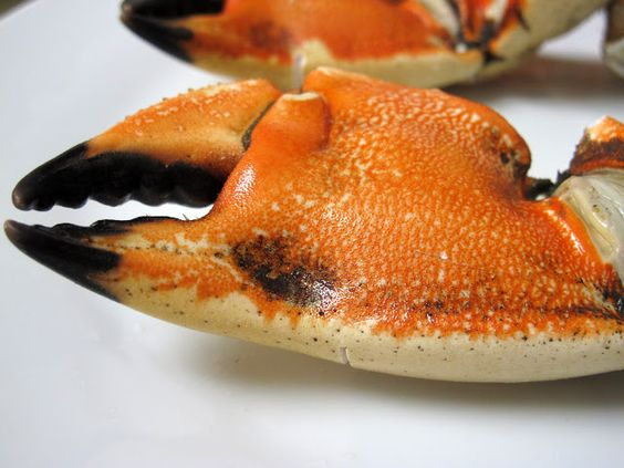 I Believe I Can Fry: Florida Stone Crab Claws w/ Creamy ...