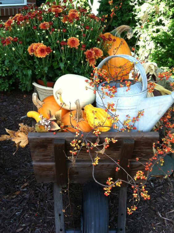 Pumpkins & bittersweet with mums in my Fall wheelbarrow!