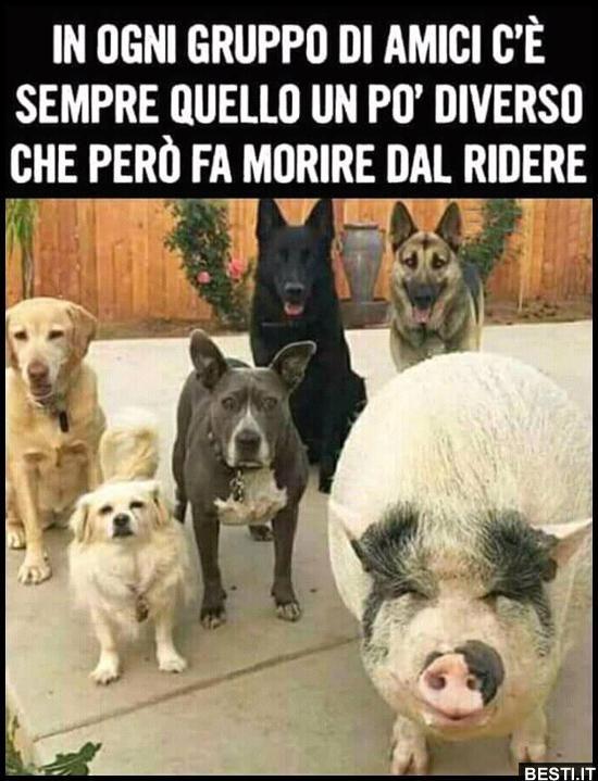 In Ogni Gruppo Di Amici Besti It Immagini Divertenti Foto