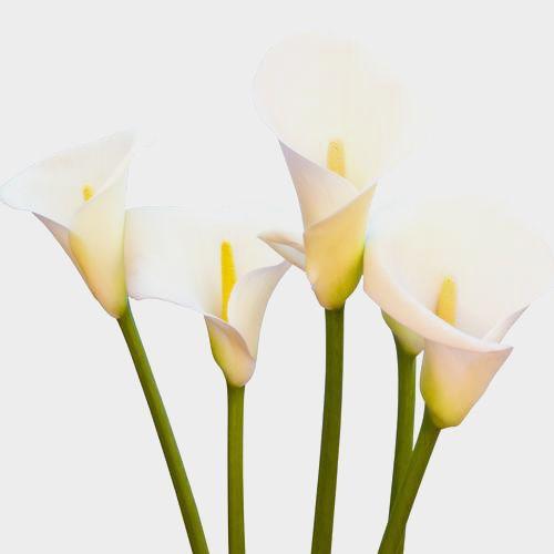 Pin On Boquet Flower Options