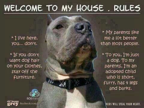 House Rules ~ this goes for the homes of all 4-legged furry kid parents, too