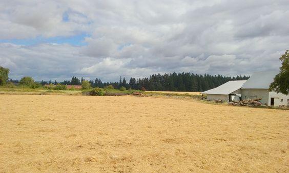 Hillsboro farm 2016 Summer