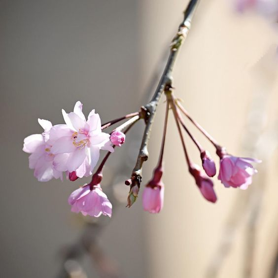 A Little Spring: