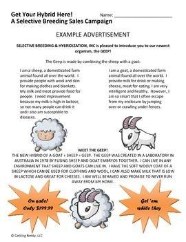 Selective Breeding Worksheet Middle School - Worksheets