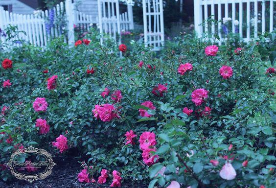 Trois Petites Filles: Flower carpet roses