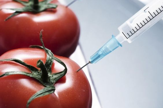 Ghana Must Welcome GM Foods