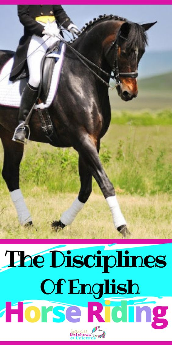If you've just started learning to ride or are at the stage where you're  thinking about trying different disciplines it can be daunting getting  to know what they're all about. Check out this guide to the different types of English riding.#englishhorseriding#englishhorsebackriding#typesofhorsebackriding #beginnerhorsebackriding#beginnerhorsebackridingtips