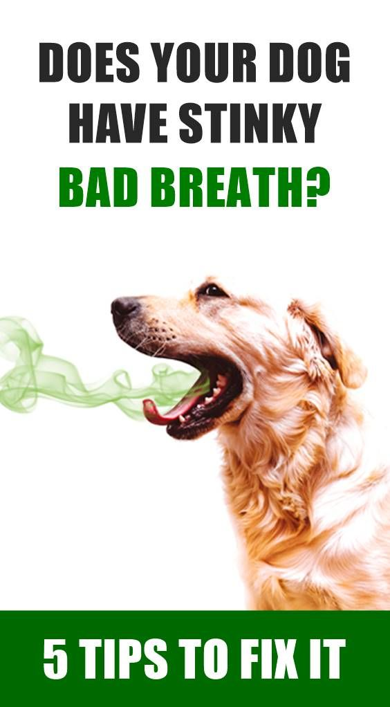 5 Tips To Get Rid Of Your Dog S Bad Breath Bad Dog Breath Dog Bad Breath Remedy Dog Breath