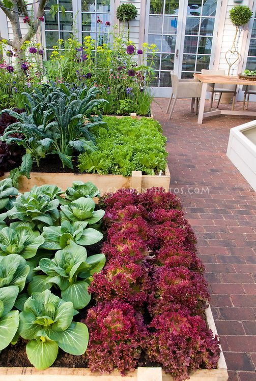 Kitchen Garden~ rows of red lettuces, green lettuce, kale, pak choi, salad greens, flowers, square foot type gardening | GardenPhotos: