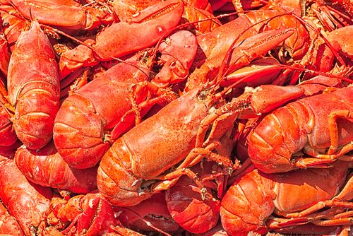10 Best Things to Eat on a Canada & New England Cruise
