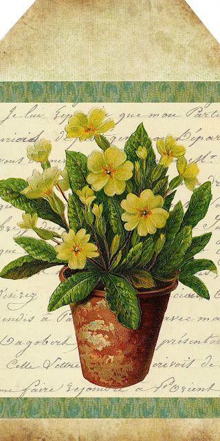 Sweet Yellow Primrose ~ free printable tag