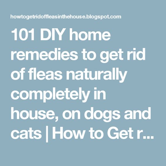 fleas home remedies and remedies on pinterest. Black Bedroom Furniture Sets. Home Design Ideas