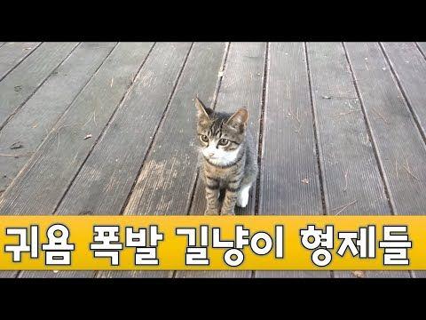 고양이에 있는 핀