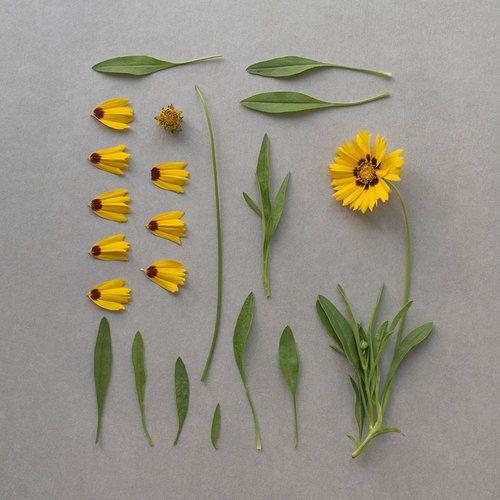 Blume inkl. Ersatzteillager