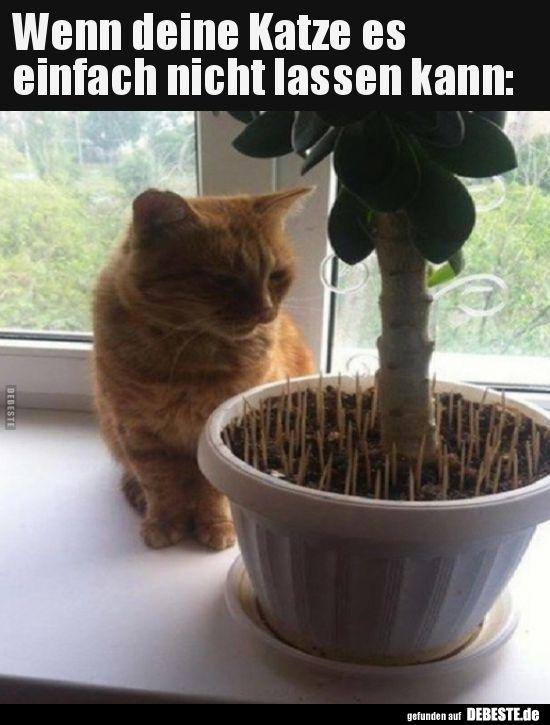 Wenn Deine Katze Es Einfach Nicht Lassen Kann Lustige Bilder Spruche Witze Echt Lustig Katze Lustig Lustige Bilder Katzen Witze