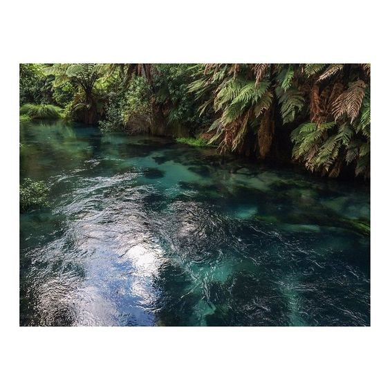 P U R E  Drinking from the Blue Springs, Te Waihou Walkway, New Zealand #ayu #ayuperfumeoils #ayurveda #pure #newzealand #bluesprings