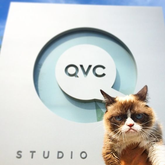 Grumpy Cat takes over QVC's Christmas in July | Grumpy Cat® - The world's grumpiest cat!