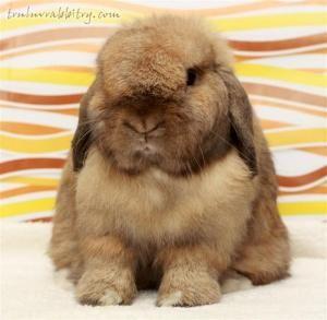 Cute fluffy bunny <3