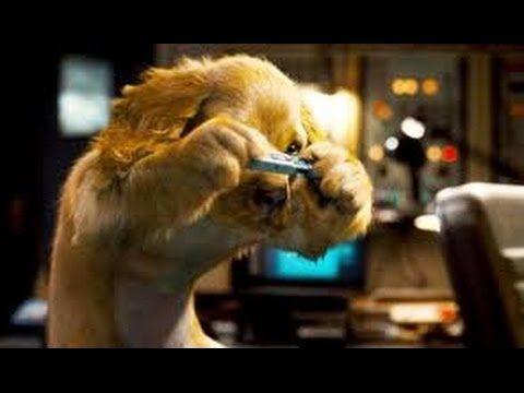 Como Perros Y Gatos 2 La Revancha De Kitty Galore Pelicula Completa En Espanol Latino Youtube Como Perros Y Gatos 2 Perro Gato Perros